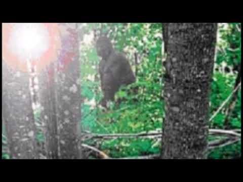 Bigfoot near Beaumont Texas