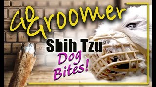 Shih Tzu Dog Bites!
