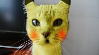 mi gato es un pokemon en la vida real parodia pikachu