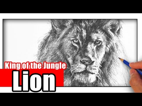 how-to-draw-a-lion-with-pencil