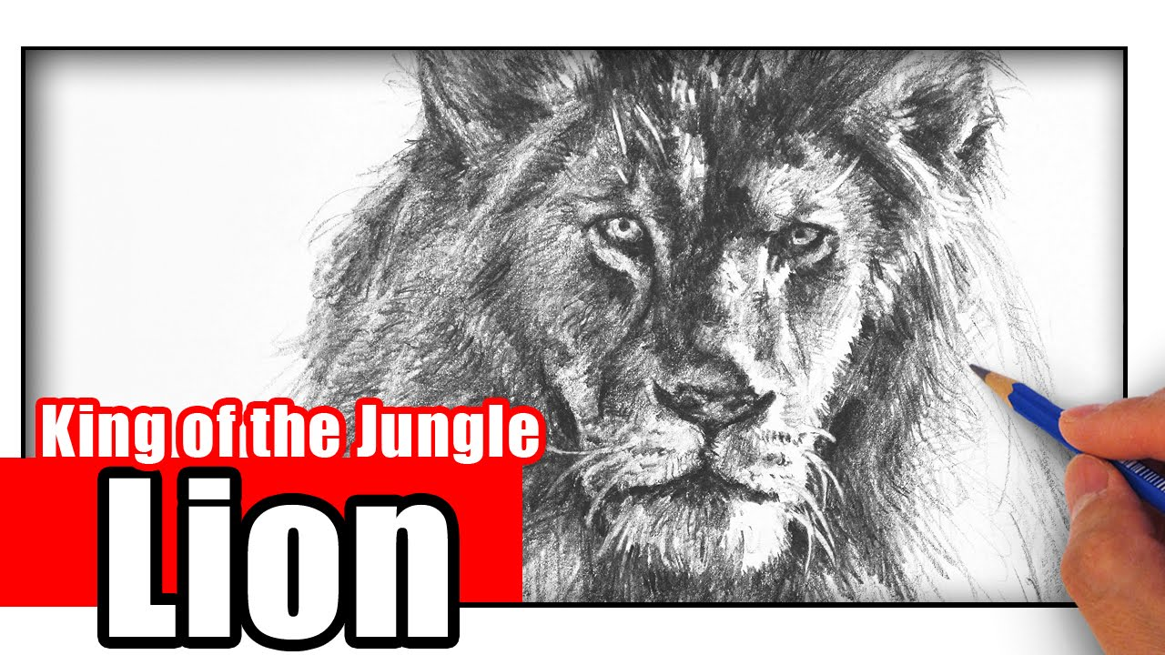 How to draw a lion with pencil