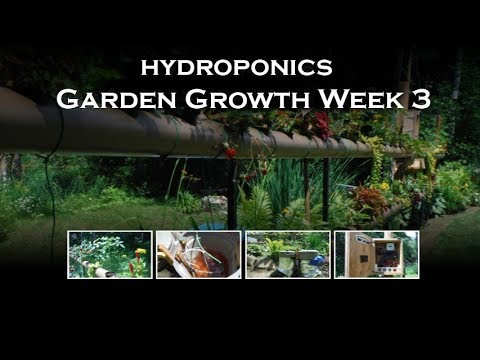 Hydroponics Garden with Solar Powered Automatic Watering System (NFT) Week 3
