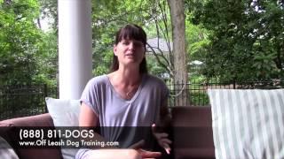 Raleigh The Plott Hound Off Leash Dog Training Video Testimonial