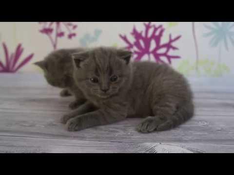 КАК ПРОТИРАТЬ ГЛАЗКИ КОТЯТАМ! Закисшие глазки у котят. Протираем глазки котятам!