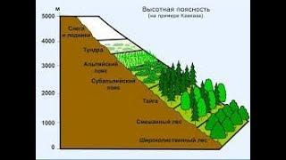 Природные зоны Земли. География 7 класс