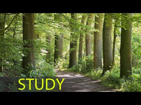 3 Hour Music to Study and Concentrate: Relaxing Music, Alpha Waves, Meditation Music, Relax �