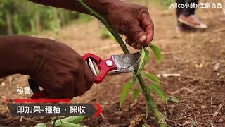Alice小舖-印加果油第二篇【印加果種植、修剪與採收】