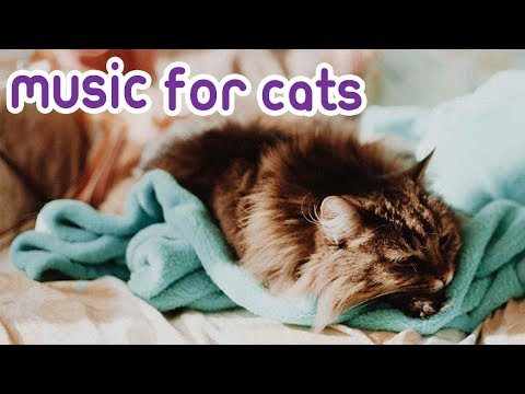 Classic Cat Melodies Music: Relaxing music for Kittens!