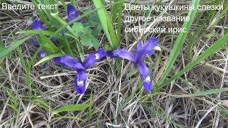Кукушкины слезки Сибирский ирис Полевые цветы Лесные цветы поход лес природа тайга сибирь охота тай