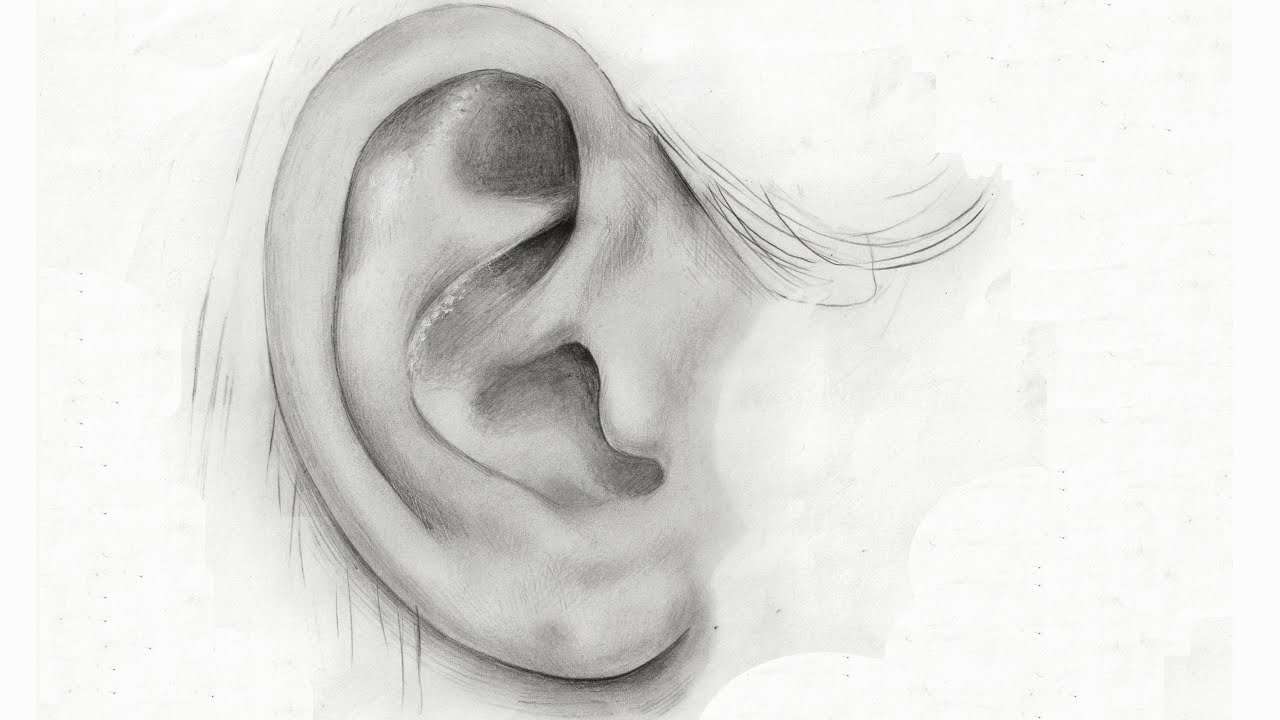 This is a photo of Obsessed Ear Drawing Simple