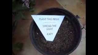 Katy Perry Prism Album Seed Plant Seeds Roar Spread The Light