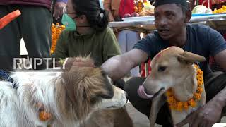 Nepalese Tihar Festival For Dogs