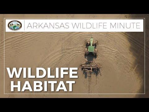 Managing Wildlife Habitat
