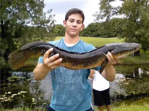 Florida freshwater fishing slideshow youtube for Where to buy fishing license near me