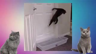 s koshkami Приколы с кошками. Кошачий юмор.