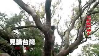 見識台灣旅遊網-台中石岡 五福臨門神木典故
