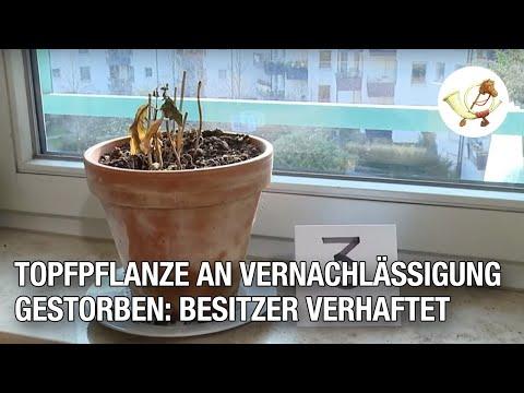 Topfpflanze an Vernachlässigung gestorben: Besitzer verhaftet [P24-Klassiker]