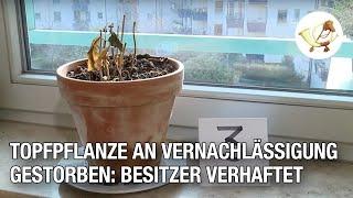 Topfpflanze an Vernachlässigung gestorben: Besitzer verhaftet