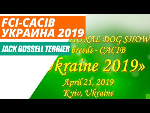 Выставка собак FCI-CACIB «Украина 2019», Киев. Джек Рассел Терьер