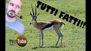 (YTP) Jon sric è fatto e attratto dalle gazzelle - breve clip