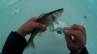 Зимняя рыбалка Кама март судак берш на тюльку