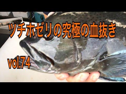 ツチホゼリの究極の血抜き編 vol.74