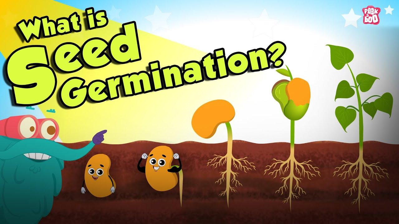 Download What Is Seed Germination?   SEED GERMINATION   Plant Germination   Dr Binocs Show   Peekaboo Kidz