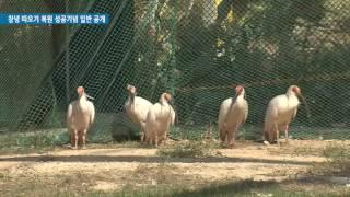 창녕 따오기 복원 성공기념 일반 공개