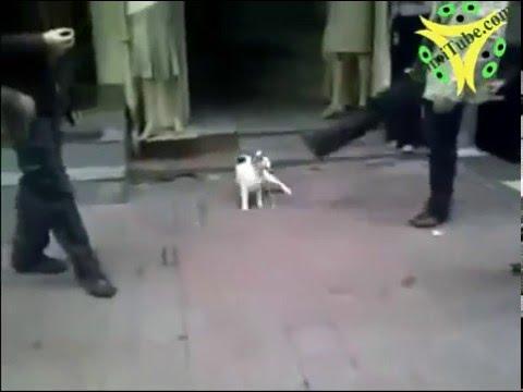 قط  يهاجم كلب بشراسة والكلب يختبيء منه ... A cat attacks a