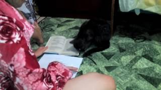 Катоша сушится,и помогает делать уроки..(, 2016-09-20T03:44:15.000Z)
