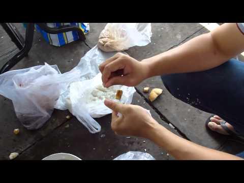 Cách Vo mồi cơm câu cá tra - thegioicauca.com