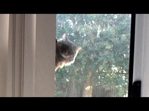 How To Keep Your Cat From Climbing The Screen