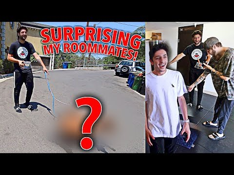 SURPRISING MY ROOMMATES WITH NEW PETS!!