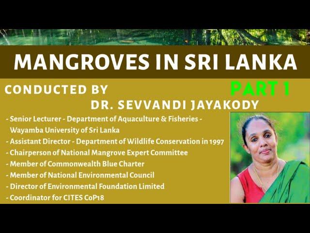 Mangroves in Sri Lanka (14th November 2020) - Part 1