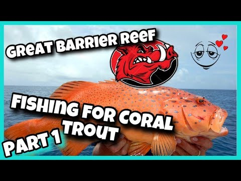 CORAL TROUT Fishing On The GREAT BARRIER REEF AUSTRALIA