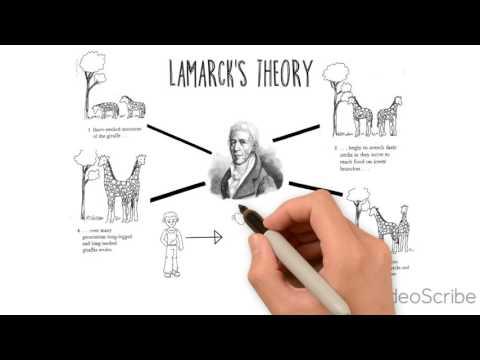 Theory of Evolution - Darwin, Lamarck