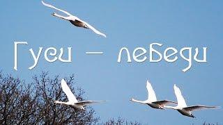 ГУСИ -  ЛЕБЕДИ (Новинки музыки-2016)