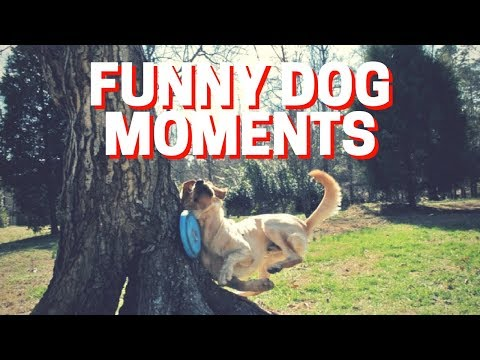 Funny Dog Moments - Cute Funny Dogs Doing Funny Things