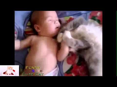 funny cats – Cat loves Baby AWW