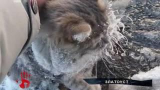 Кот, который хотел погреться под машиной и вмерз в лед, обрел хозяев