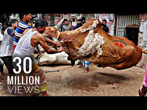122 | Grounding Of The Mighty Helicopter | Bengal Farm House | Qurbani'19 | Eid Ul Azha | Exclusive