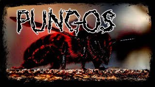 Pungos - Tagalog Horror Story (Fiction)