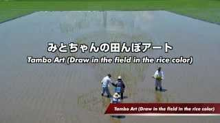 Tambo Art (Draw in the field in the rice color)