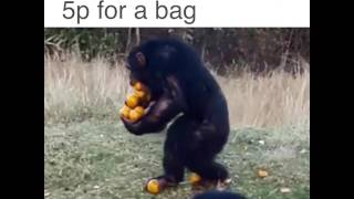 Funny video! when you won't pay 5p for a bag