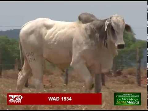 LOTE 69 - WAD 1534