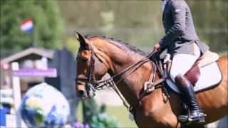 Equestrian Music Video//Don't Let Me Down