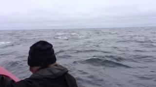 Blue Whale Encounter 3