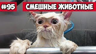 Смешные животные - кот в ванной | Bazuzu Video ТОП подборка 95, январь 2018