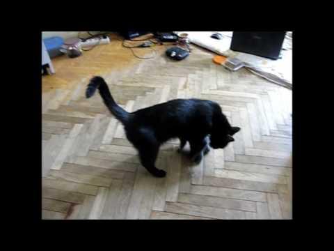 Вопрос: Почему взрослая кошка может рычать и шипеть на своих котят?