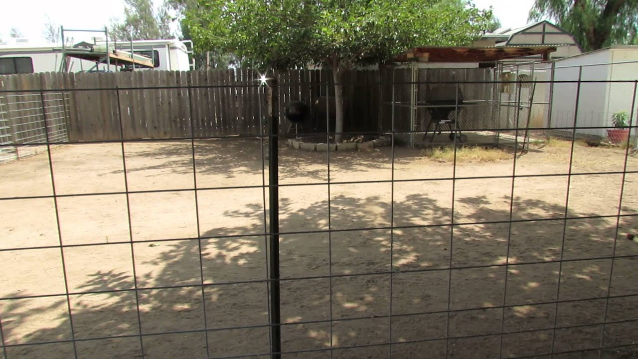 Pig fencing-hog paneling and T posts - YouTube